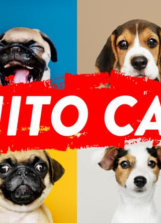 Circuito Canino